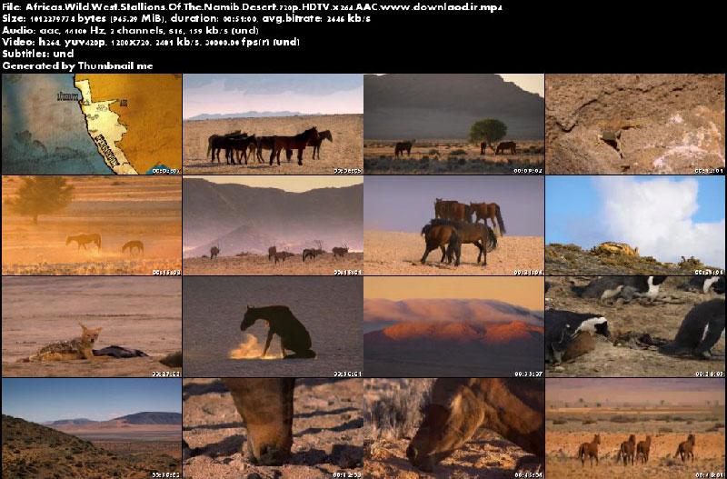 Africas Wild West Stallions of the Namib Desert