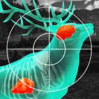 Wild Hunt Sport Hunting Logo