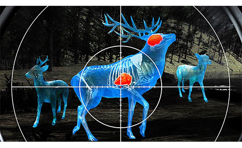 دانلود Wild Hunt Sport Hunting جدید