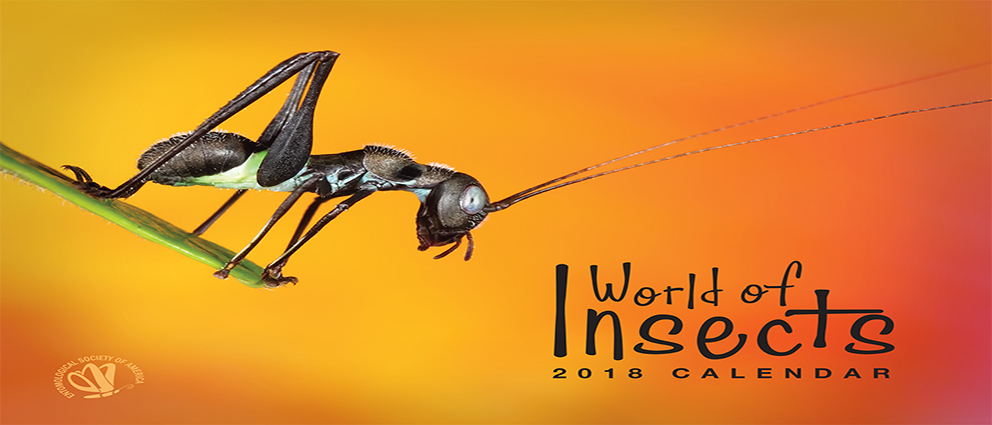 2018 World of Insects Calendardd cover