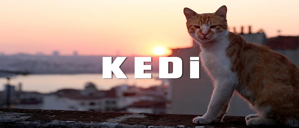 Kedi (2017).www.download.ir