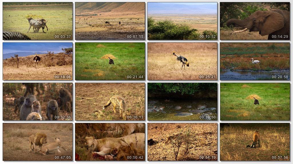 Serengeti Natures Greatest Journey - Screen
