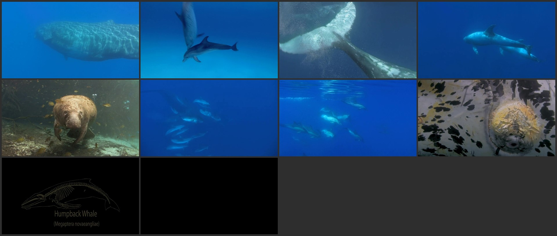Dolphins And Whales 3D Tribes Of The Ocean 2008 720p BluRay