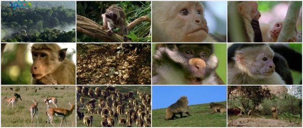 Screenshot_Clever.Monkeys_www.download.ir