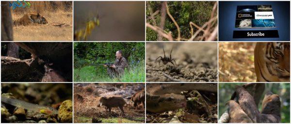 Screenshot_Secret.Life.of.Predators_www.download.ir