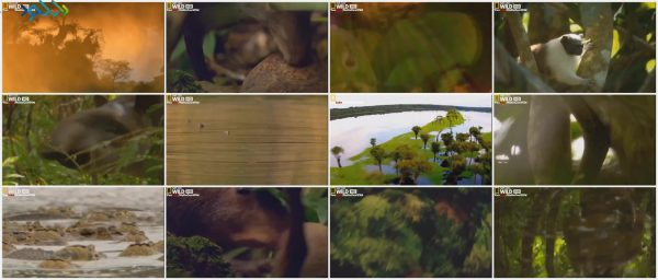 Screenshot_Strange.Things.In.the.Amazon.Forest_www.download.ir