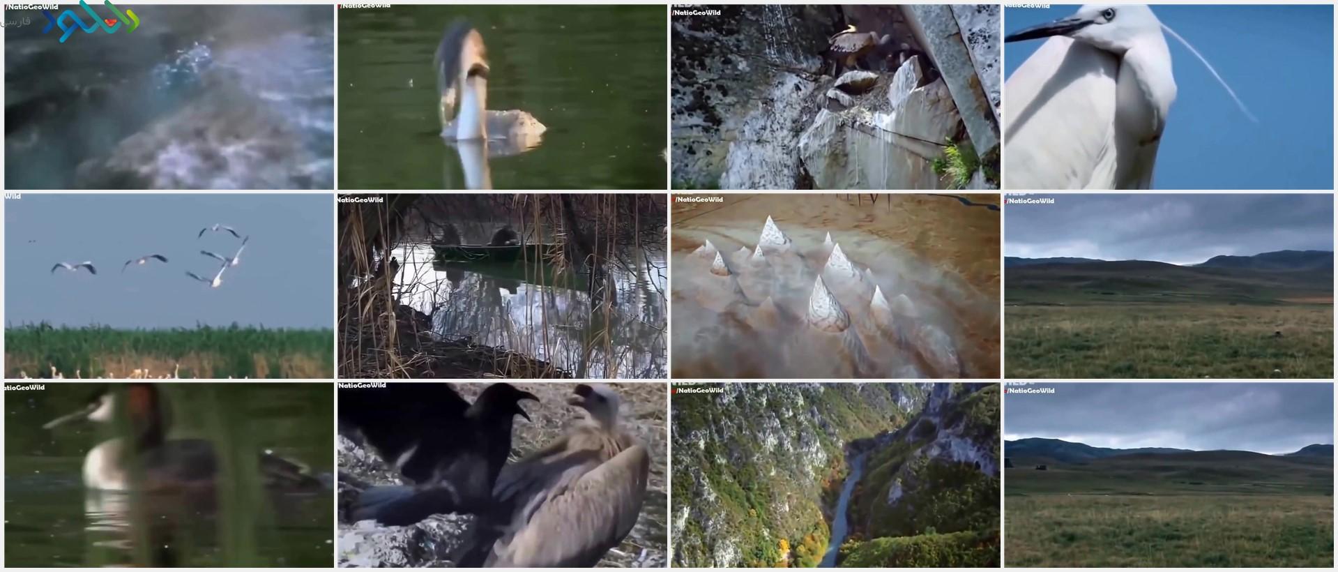 Screenshot_Wild.Balkan.WIldlife_www.download.ir