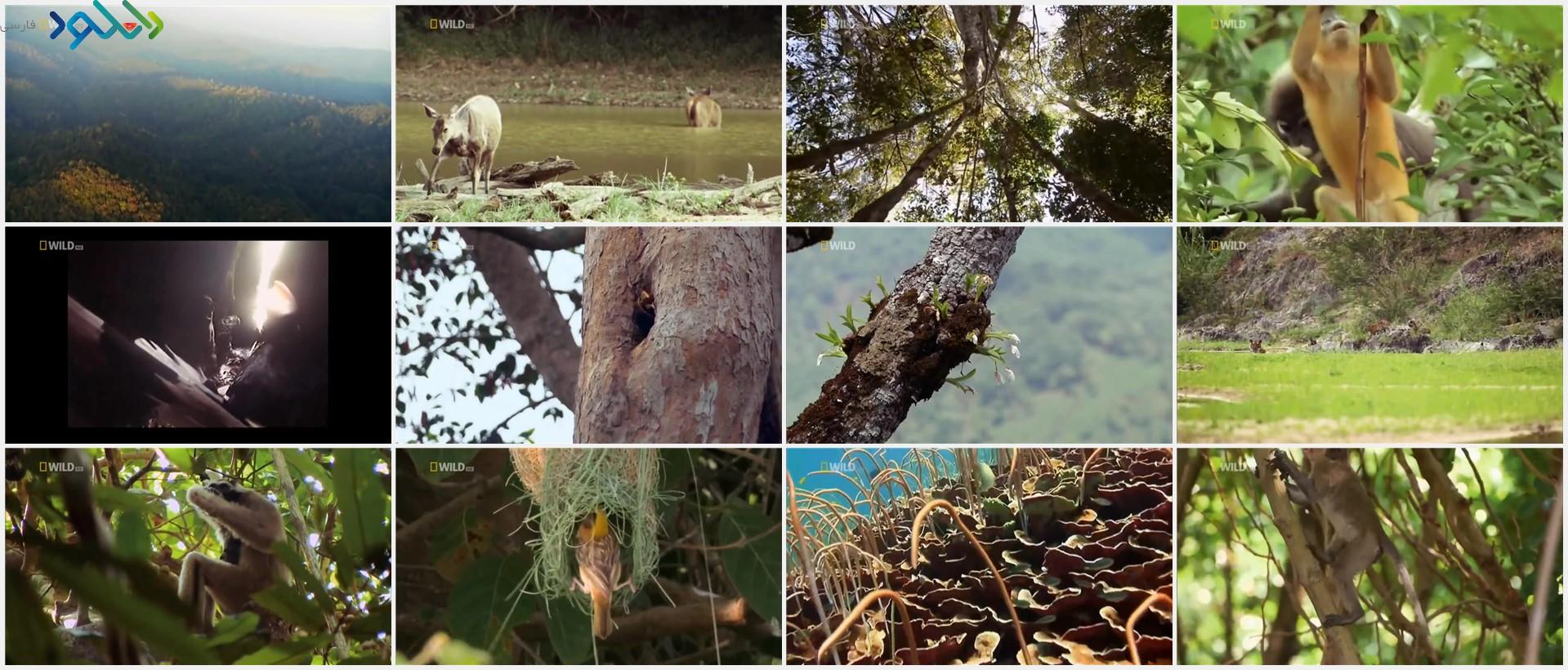 Screenshot_Wild.Thailand.A.Land.Of.Beauty_www.download.ir