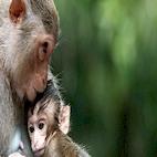 logo_Clever.Monkeys_download.ir