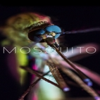 logo_Mosquito_www.download.ir
