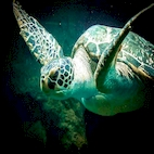 logo_The.Amazing.Life.of.Turtle.and.Tortoises_download.ir