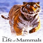 logo_The.Life.of.Mammals_www.download.ir