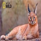 www.download.ir_logo_Strange.Animals.of.Asia