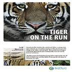 Tiger-On-The-Run-logo