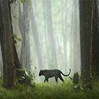Indias-Wild-Leopards-logo
