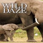 دانلود فیلم مستند Wild Daze 2020